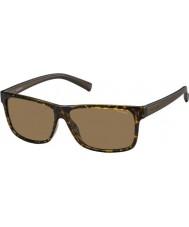Polaroid Pánská pld2027-S M31 ig Havana hnědé polarizované sluneční brýle